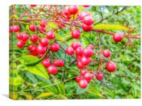 A pop of red red berries, Canvas Print