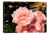 A bouquet of pink rose flowers        , Canvas Print