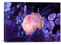 A single pink rose flower, Canvas Print