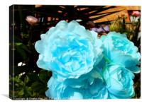 A bouquet of blue rose flowers, Canvas Print
