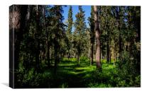 Pine Forest in Spring, Canvas Print