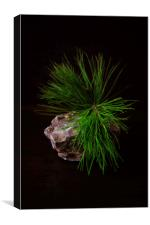 Pine Branch on a Rock, Canvas Print