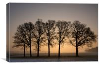 Row of trees at sunrise, Canvas Print