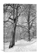 The Chestnut Walk Dalzell Estate Motherwell, Canvas Print