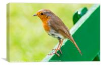 Robin on a bench., Canvas Print