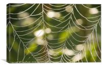 Abstract close-up glistening dew covered cobweb, Canvas Print