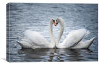 Courting Mute Swans, Canvas Print