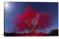 The Red tree, Canvas Print