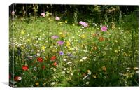 Summer Meadow, Canvas Print