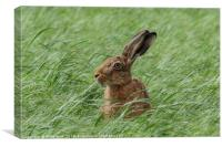 Inquisitive Hare Landscape, Canvas Print