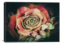 Old fashioned rose, Canvas Print