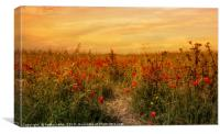 Sunset on a field of poppies, Canvas Print