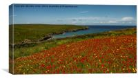 Red poppies of West Pentire  Cornwall, Canvas Print