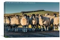 A Curiousness of Swaledales, Canvas Print