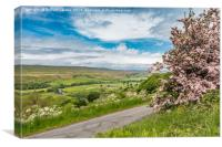 Pink Hawthorn and Holwick, Upper Teesdale, Canvas Print