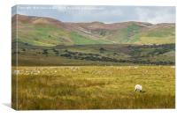 Towards Noon Hill & Cronkley Fell, Teesdale, Canvas Print