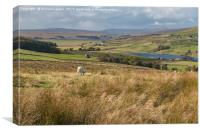 Grassholme and Selset Reservoirs, Lunedale, Canvas Print