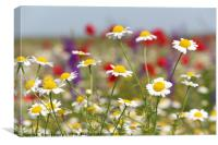 wild flowers field nature spring scene, Canvas Print