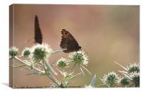 butterfly spring nature morning scene, Canvas Print