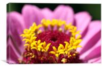 flower macro summer nature background , Canvas Print