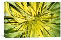 sunflower close up nature background, Canvas Print