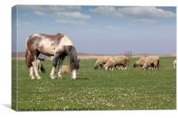 horse and sheep on pasture farm animals, Canvas Print