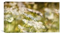 meadow spring season nature background, Canvas Print