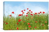 poppy wild flowers spring season, Canvas Print