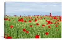 green field red poppy flowers and blue sky , Canvas Print