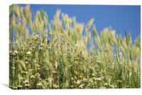 meadow with chamomile and grass close up, Canvas Print