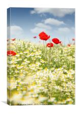 chamomile and poppy flower meadow, Canvas Print