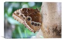 butterfly on tree close up, Canvas Print