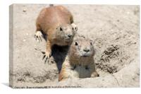 two prairie dogs watching from hole, Canvas Print