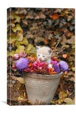 kitten in a vase with flowers , Canvas Print