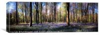 Bluebells in West Woods., Canvas Print