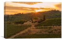 Vineyard near Volpaia town in Chianti region, Canvas Print