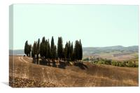 Typical landscapes for Siena Province in Tuscany, , Canvas Print