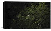 The full moon peaking out, Canvas Print