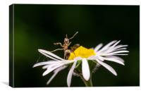 Dancing On A Flower , Canvas Print