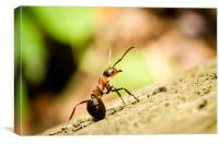 Ant On The Forest Floor , Canvas Print