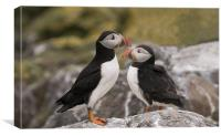 Two Puffins on the rocks, Canvas Print