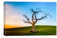 Lonely Tree At Sunset, Canvas Print