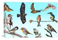 A collection of native British birds, Canvas Print