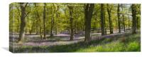 Kinclaven bluebell wood panorama, Canvas Print