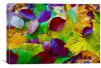Autumn Leaf Fall, Canvas Print