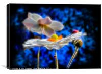 Japanese Anemones glowing in Midnight Blue      , Canvas Print