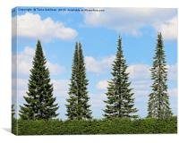 Trees in a Row, Canvas Print