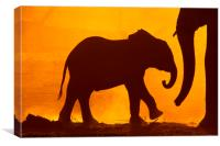 Baby Elephant at Dawn, Canvas Print