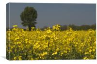Yellow Field, Canvas Print