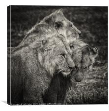 Brothers, Canvas Print